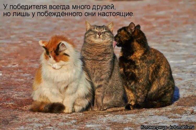 Котоматрица: У победителя всегда много друзей, но лишь у побеждённого они настоящие.