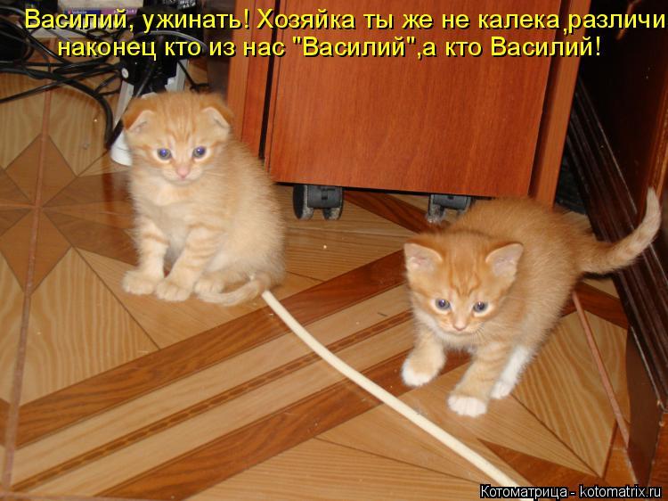 """Котоматрица: Василий, ужинать! Хозяйка ты же не калека различи наконец кто из нас """"Василий"""",а кто Василий! наконец кто из нас """"Василий"""",а кто Василий! ,"""