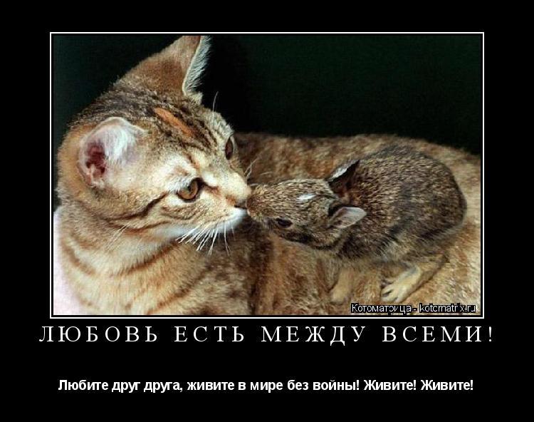 Котоматрица: ЛЮБОВЬ ЕСТЬ МЕЖДУ ВСЕМИ! Любите друг друга, живите в мире без войны! Живите! Живите!