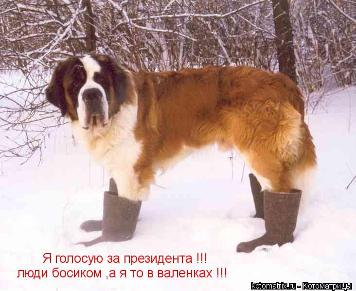 Котоматрица: Я голосую за президента !!! люди босиком ,а я то в валенках !!!