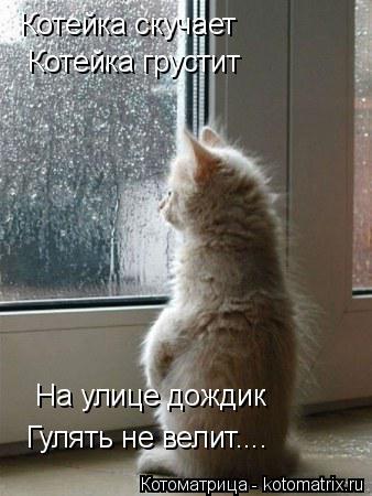 Котоматрица: Котейка скучает Котейка грустит На улице дождик Гулять не велит....