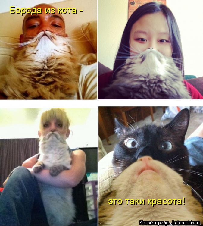 Котоматрица: Борода из кота - это таки красота!