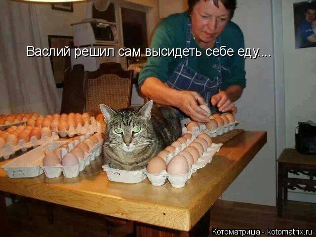 Котоматрица: Васлий решил сам высидеть себе еду....