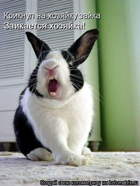 Котоматрица: Крикнул на хозяйку зайка Заикается хозяйка!
