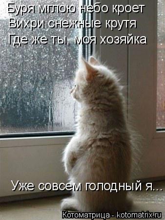 Котоматрица: Буря мглою небо кроет Вихри снежные крутя Где же ты, моя хозяйка Уже совсем голодный я...