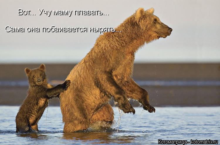 Котоматрица: Вот... Учу маму плавать... Сама она побаивается нырять...