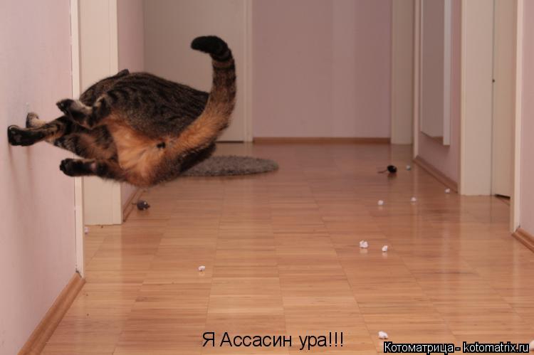 Котоматрица: Я Ассасин ура!!!