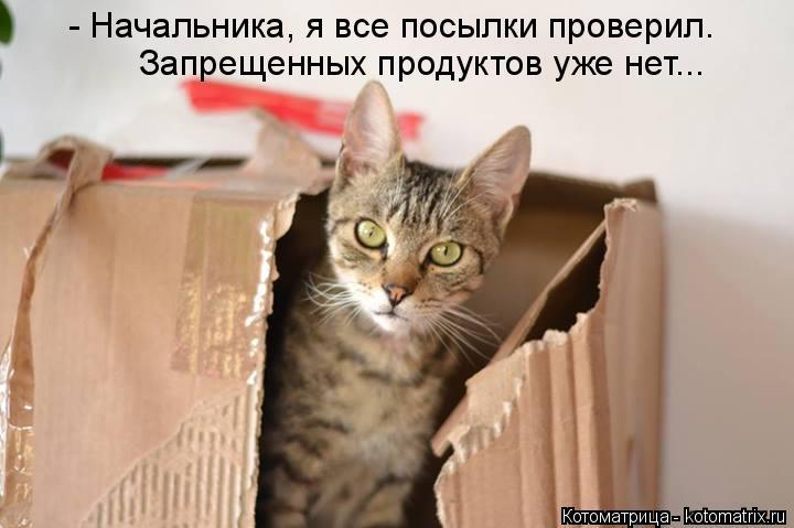 Котоматрица: - Начальника, я все посылки проверил. Запрещенных продуктов уже нет...
