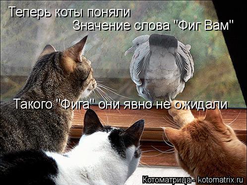 """Котоматрица: Теперь коты поняли Значение слова """"Фиг Вам"""" Такого """"Фига"""" они явно не ожидали"""