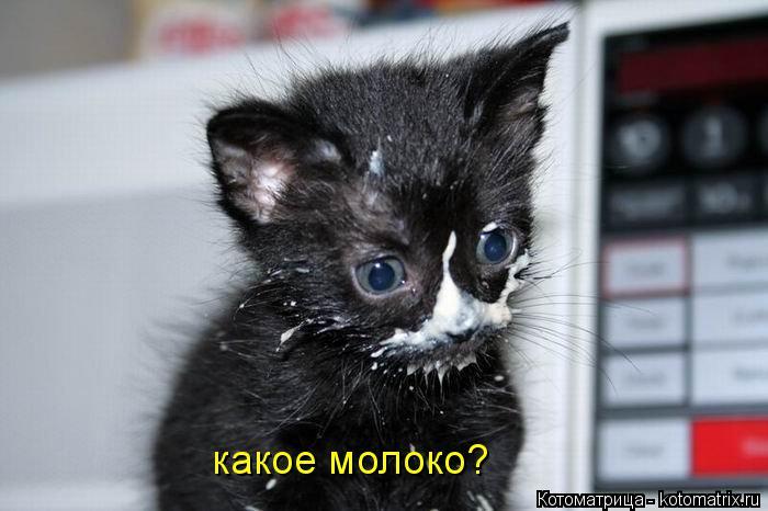 Котоматрица: какое молоко?
