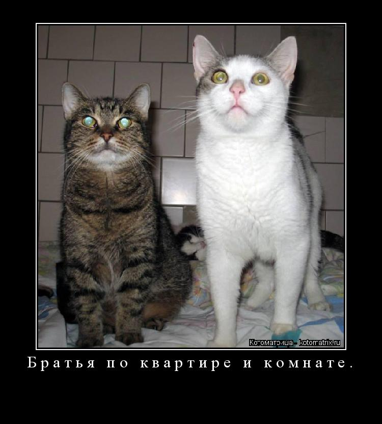 Котоматрица: Братья по квартире и комнате.
