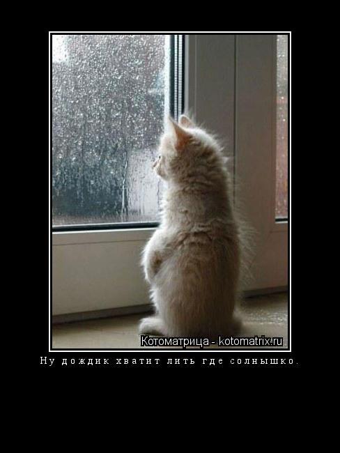 Котоматрица: Ну дождик хватит лить где солнышко.