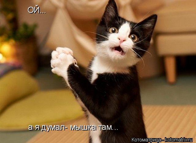 Котоматрица: ОЙ... а я думал- мышка там...