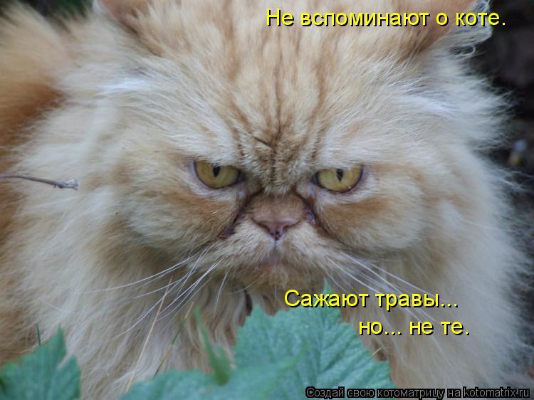 Котоматрица: Не вспоминают о коте. Сажают травы... но... не те.