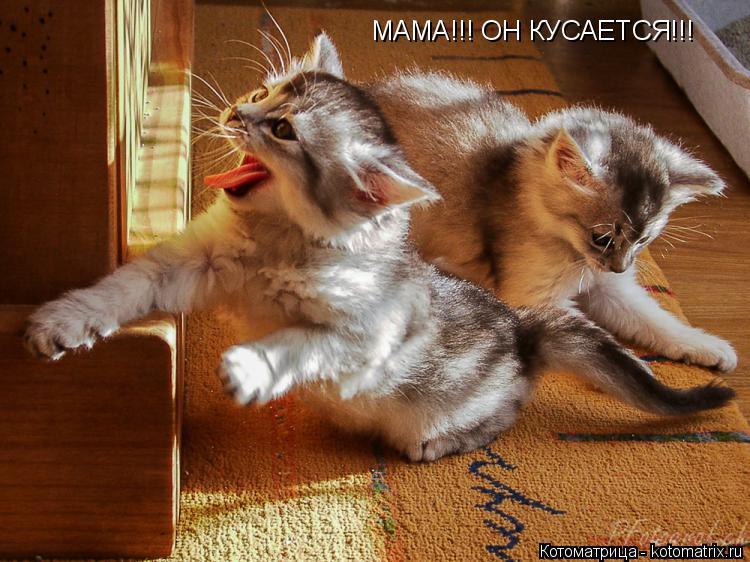 Котоматрица: МАМА!!! ОН КУСАЕТСЯ!!!