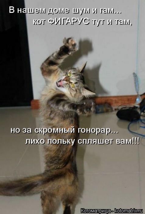 Котоматрица: В нашем доме шум и гам... кот ФИГАРУС тут и там, но за скромный гонорар...  лихо польку спляшет вам!!!