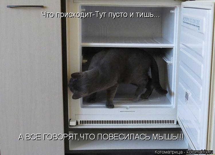 Котоматрица: Что присходит-Тут пусто и тишь...  А ВСЕ ГОВОРЯТ,ЧТО ПОВЕСИЛАСЬ МЫШЬ!!!
