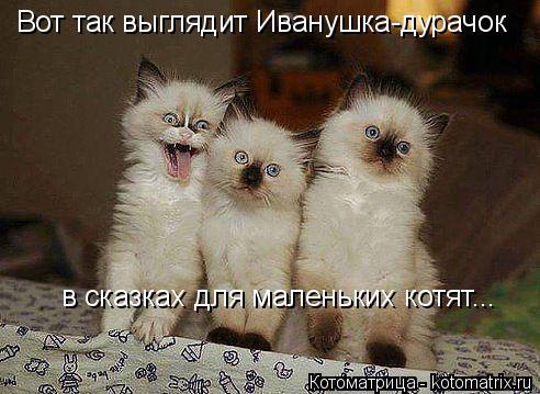 Котоматрица: Вот так выглядит Иванушка-дурачок  в сказках для маленьких котят...