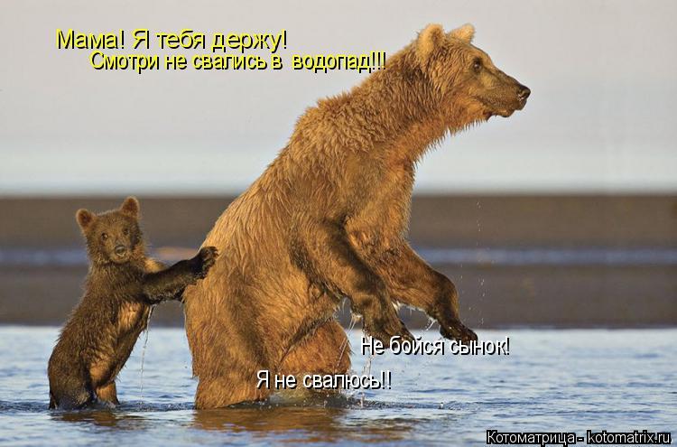 Котоматрица: Мама! Я тебя держу! Смотри не свались в  водопад!!! Не бойся сынок! Я не свалюсь!!