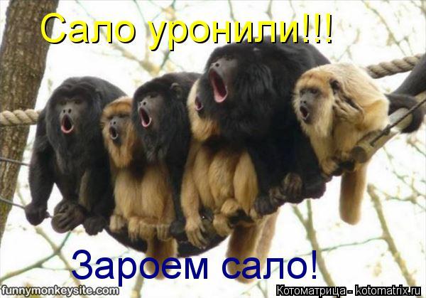 kotomatritsa_aj.jpg