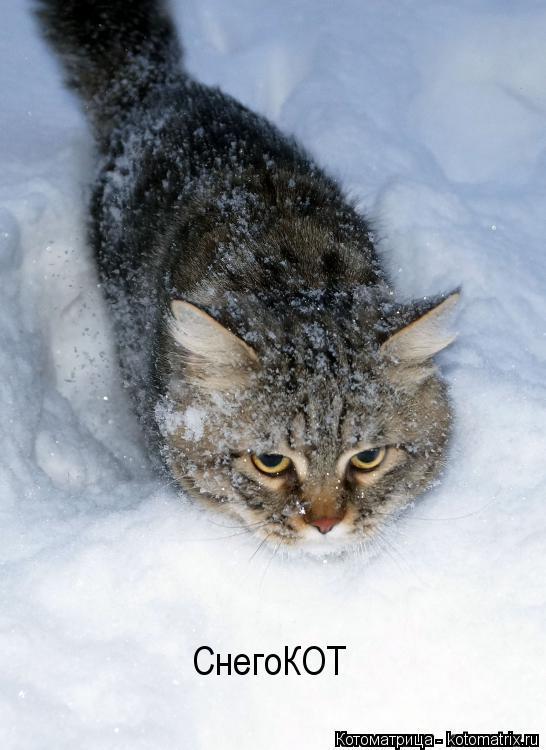Котоматрица: СнегоКОТ