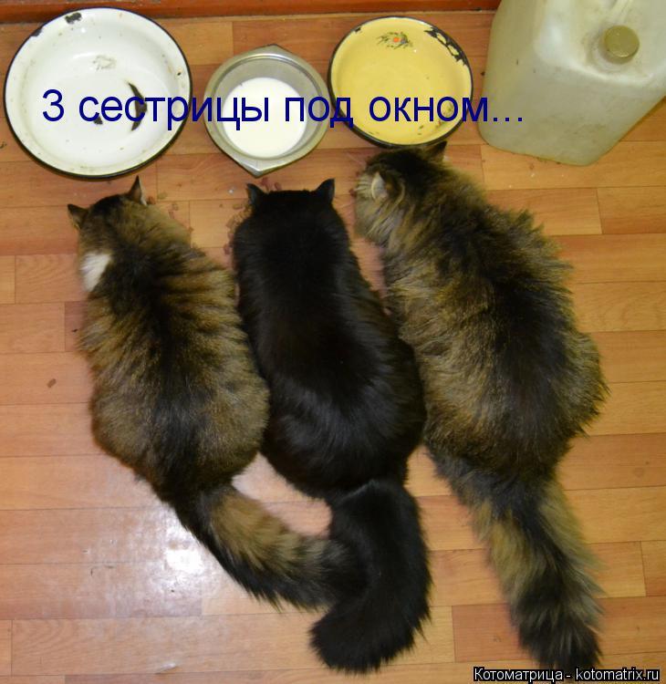 Котоматрица: 3 сестрицы под окном...
