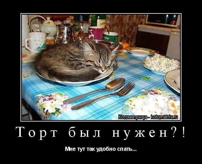 Котоматрица: Торт был нужен?! Мне тут так удобно спать...