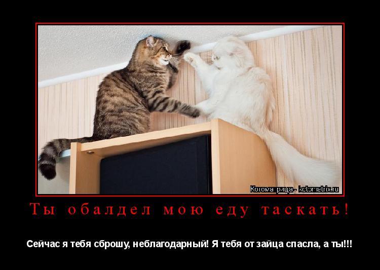 Котоматрица: Ты обалдел мою еду таскать! Сейчас я тебя сброшу, неблагодарный! Я тебя от зайца спасла, а ты!!!