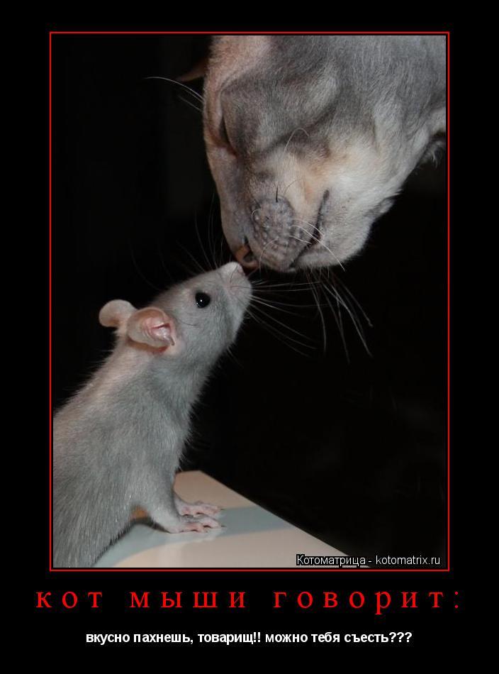 Котоматрица: кот мыши говорит: вкусно пахнешь, товарищ!! можно тебя съесть???