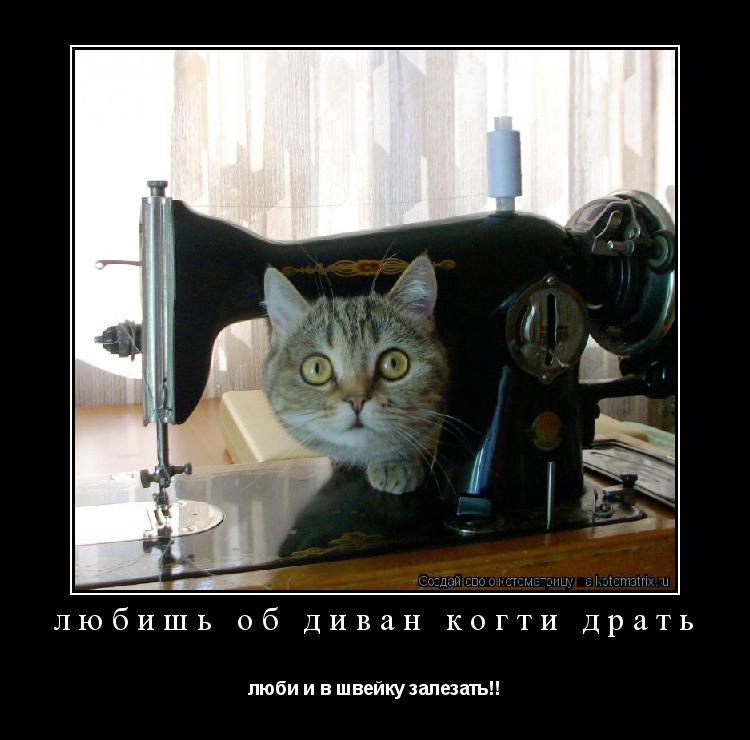 Котоматрица: любишь об диван когти драть люби и в швейку залезать!!