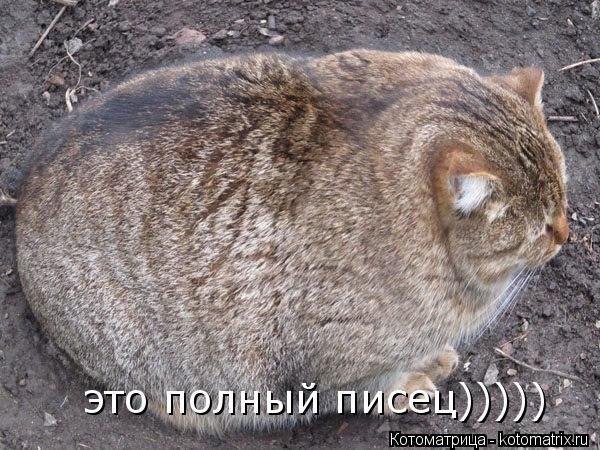 Котоматрица: это полный писец)))))