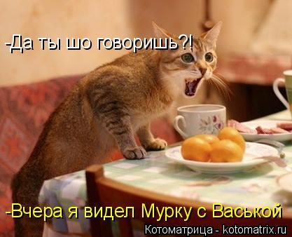 Котоматрица: -Да ты шо говоришь?! -Да ты шо говоришь?! -Вчера я видел Мурку с Васькой