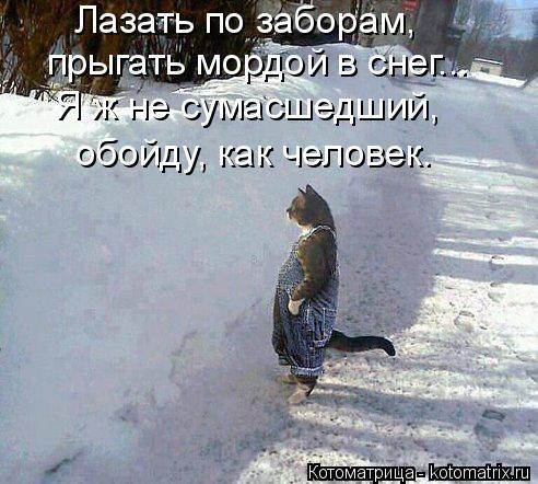 Котоматрица: Лазать по заборам, прыгать мордой в снег... Я ж не сумасшедший, обойду, как человек.