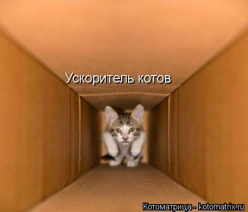 Котоматрица: Ускоритель котов