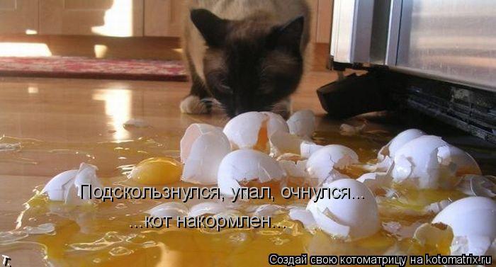 Котоматрица: Подскользнулся, упал, очнулся... ...кот накормлен...