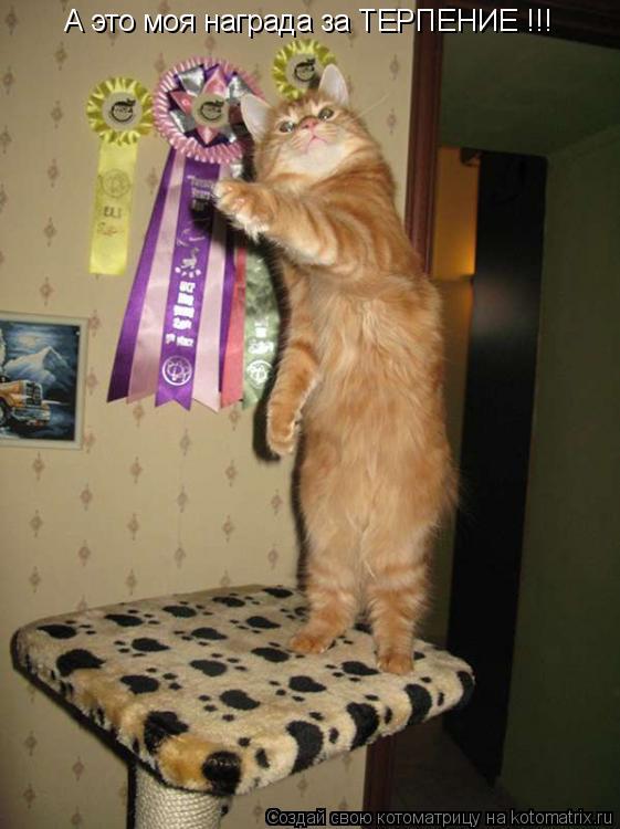 Котоматрица: А это моя награда за ТЕРПЕНИЕ !!!