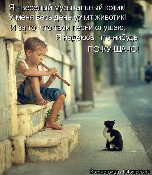 Котоматрица: Я - весёлый музыкальный котик! У меня весь день урчит животик! И за то, что твои песни слушаю, Я надеюсь, что-нибудь ПО-КУ-ША-Ю!