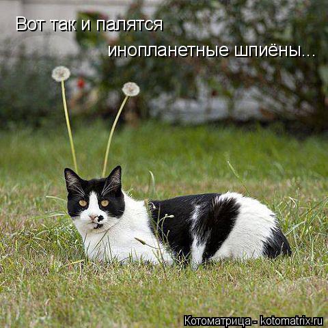 Котоматрица: Вот так и палятся инопланетные шпиёны...