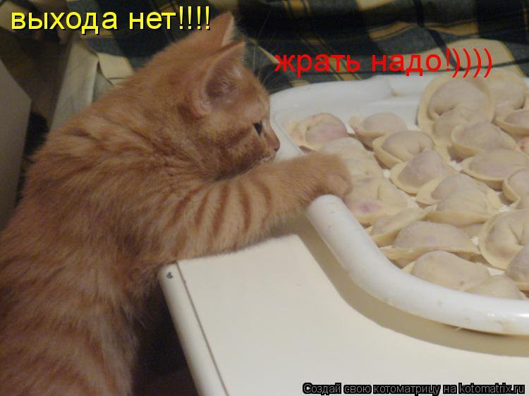 Котоматрица: выхода нет!!!!  жрать надо!))))