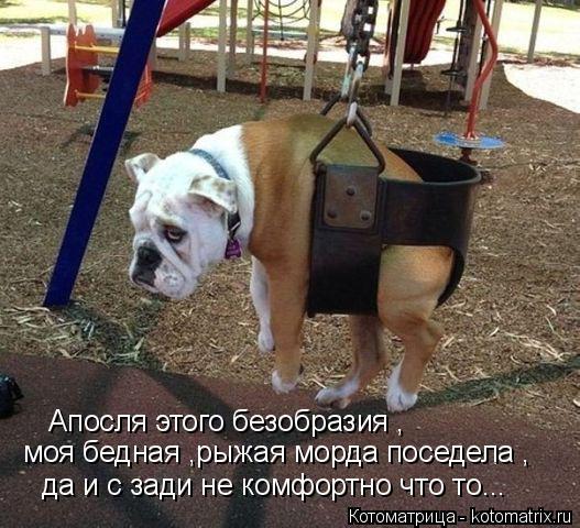 Котоматрица: Апосля этого безобразия , моя бедная ,рыжая морда поседела , да и с зади не комфортно что то...