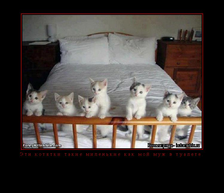 Котоматрица: Эти котятки такие миленькие как мой муж в туалете.