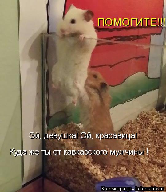 Котоматрица: Эй, девушка! Эй, красавица!  Куда же ты от кавказского мужчины !  ПОМОГИТЕ!!!