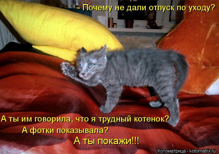 Котоматрица: - Почему не дали отпуск по уходу? А ты им говорила, что я трудный котенок? А фотки показывала? А ты покажи!!!