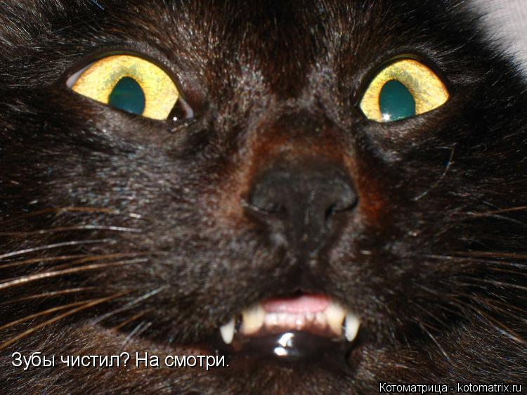 Котоматрица: Зубы чистил? На смотри.