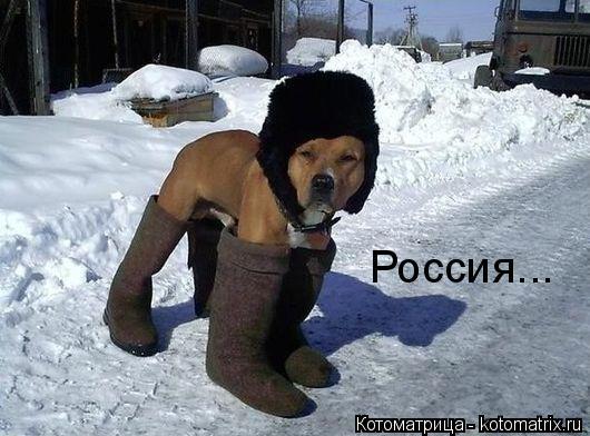 Котоматрица: Россия...
