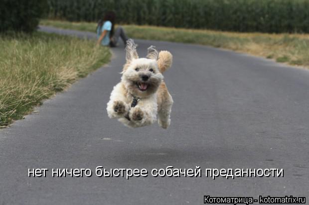 Котоматрица: нет ничего быстрее собачей преданности