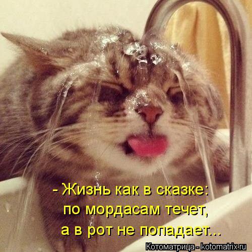 Котоматрица: - Жизнь как в сказке: по мордасам течет,  а в рот не попадает...