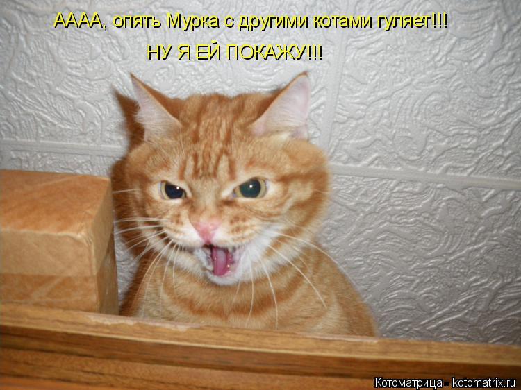 Котоматрица: АААА, опять Мурка с другими котами гуляет!!! НУ Я ЕЙ ПОКАЖУ!!!