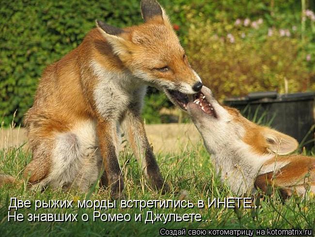Котоматрица: Две рыжих морды встретились в ИНЕТЕ... Не знавших о Ромео и Джульете...