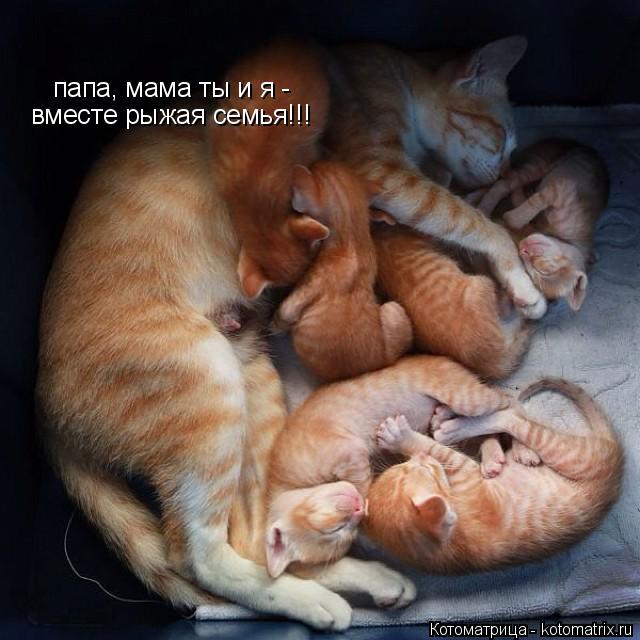 Котоматрица: папа, мама ты и я - вместе рыжая семья!!!